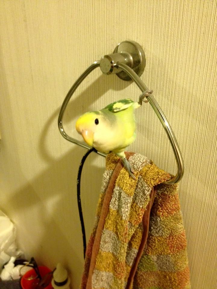 ちーちゃん、風呂上りはここで待ってる