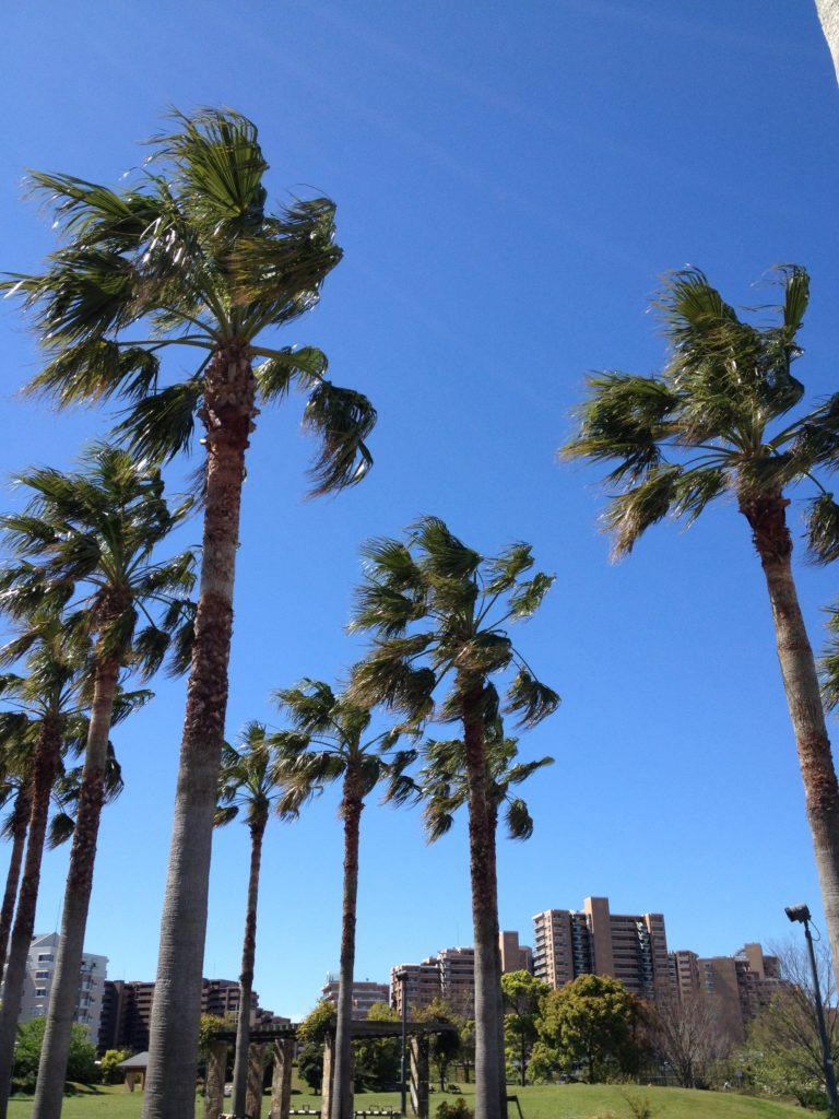 こういう木が似合う街、新浦安