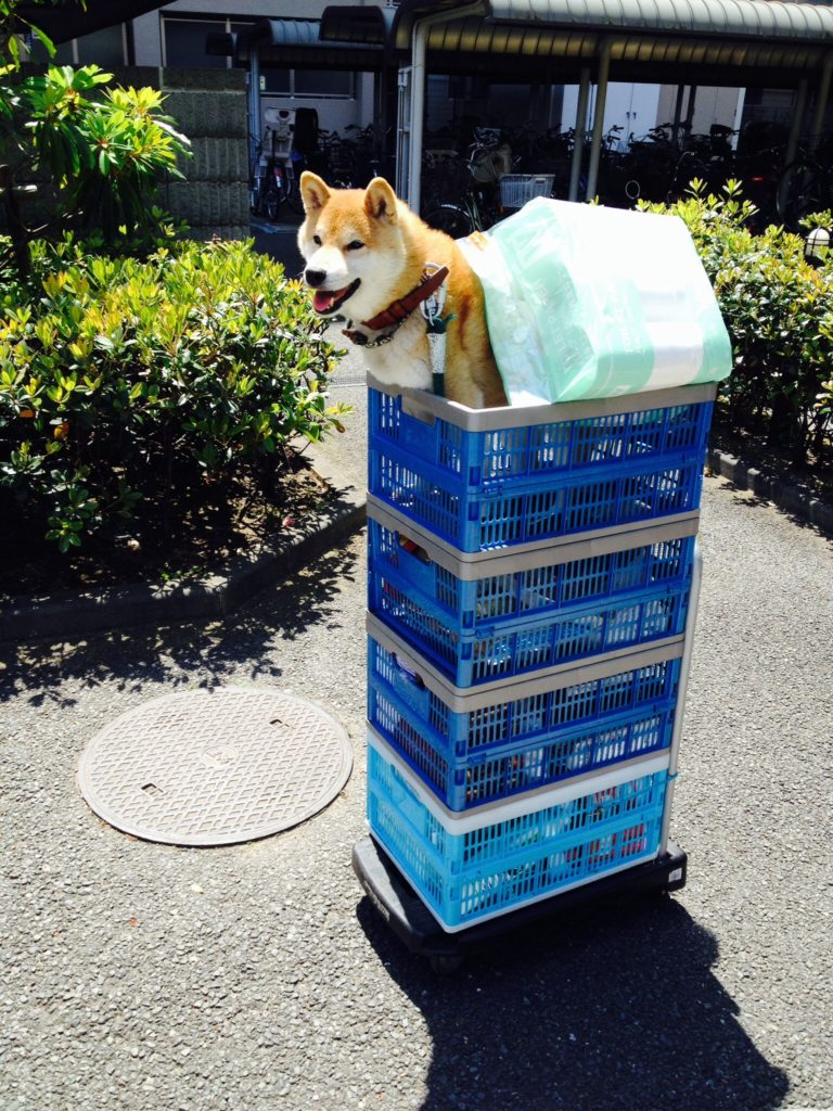 買い物後の荷物はこのように部屋まで運びます