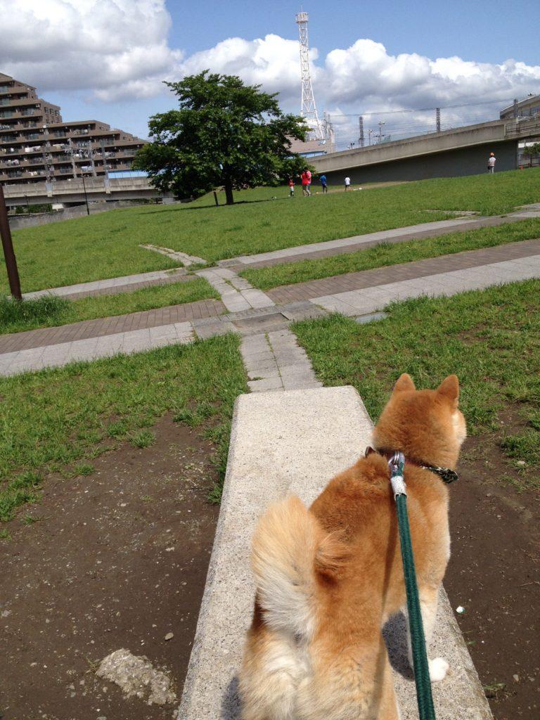 妙典イオンの裏手にあるちょっとした公園、「さて行こうか」
