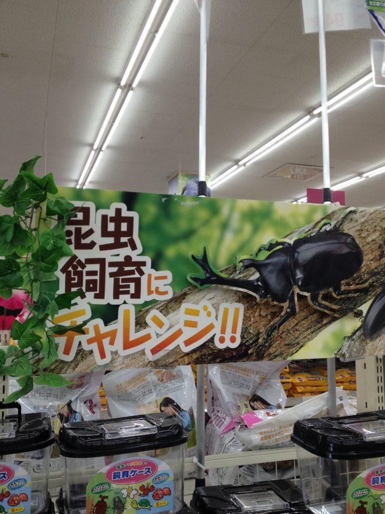 コーナンの昆虫コーナーの吊り下げ広告