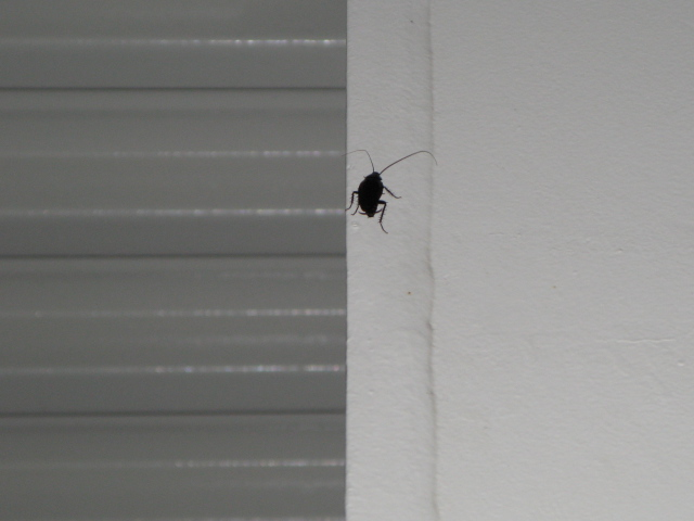 駅の柱にとまったこの虫はなんでしょう