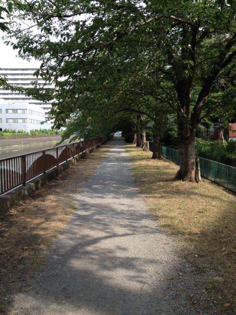散歩途中の小道