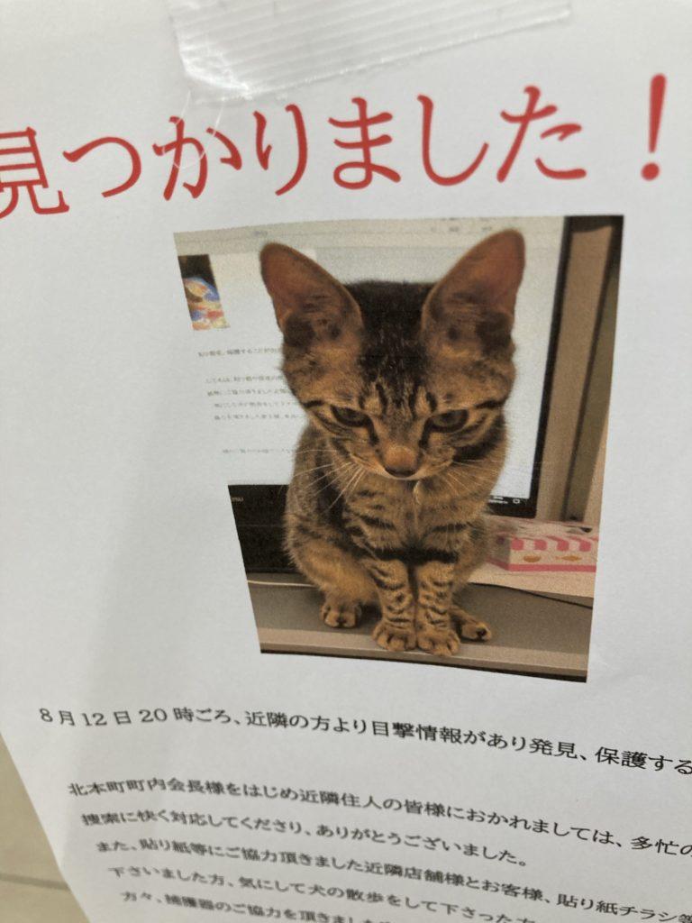 見つかった報告チラシ(猫)