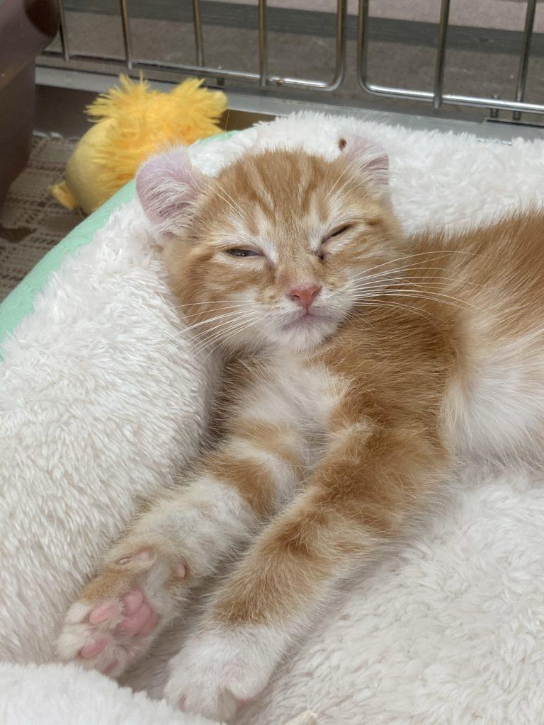 コーナン原木中山店に居た猫