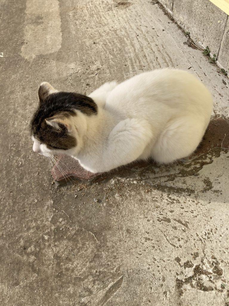 千葉ライディングパークの猫