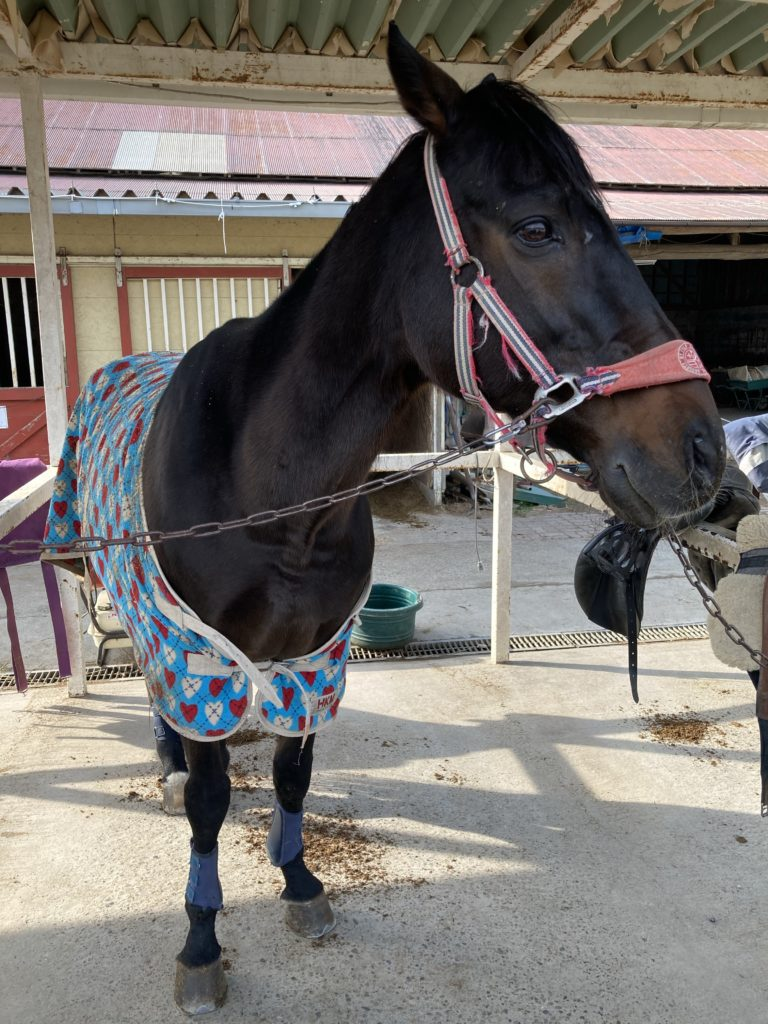 千葉ライディングパークの馬さん