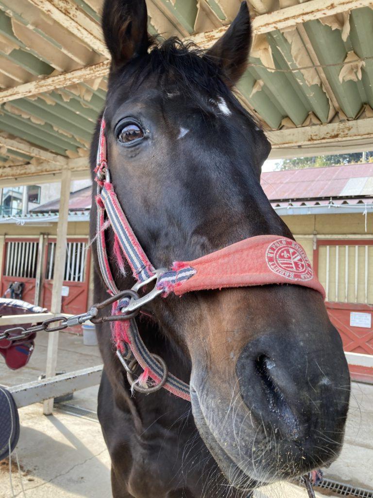 千葉ライディングパークのお馬さんをナデナデ