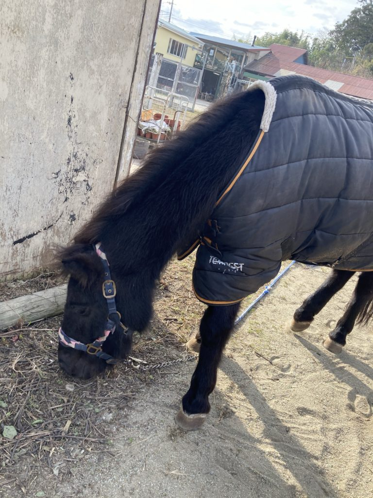 ずっと草を食べていたお馬さん