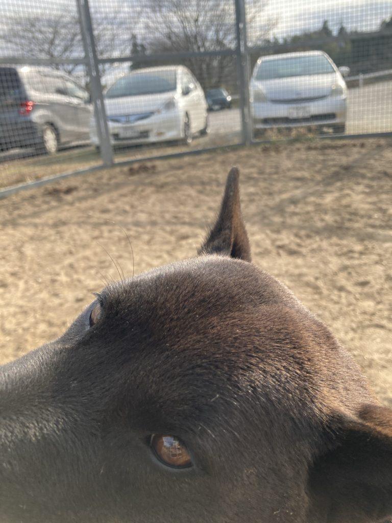 千葉ライディングパークの看板犬 コウメちゃん