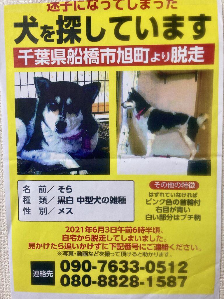 千葉県船橋市の迷子犬の情報